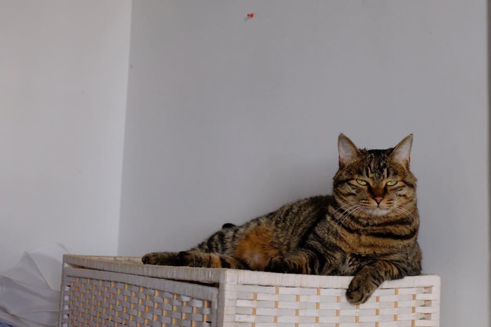 Объяснить коту, что он скоро летит в Лондон