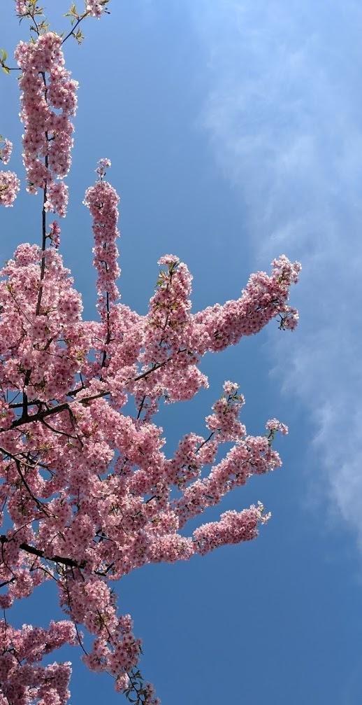 Ну и весеннее цветение