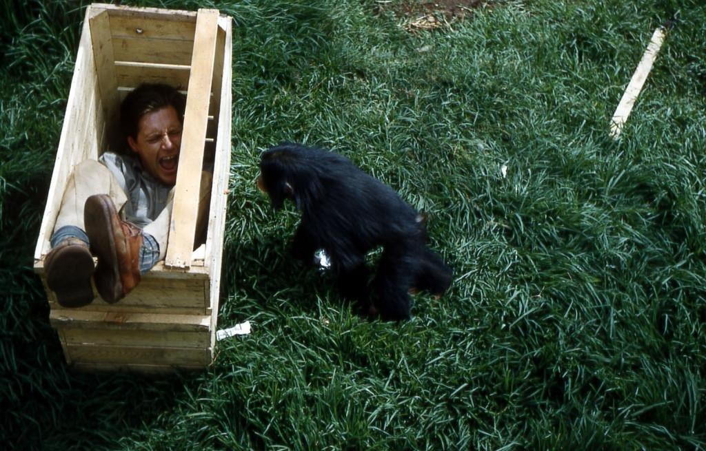 Джеральд демонстрирует детёнышу шимпанзе, что клетка для перевозки —это клёво и её не надо бояться