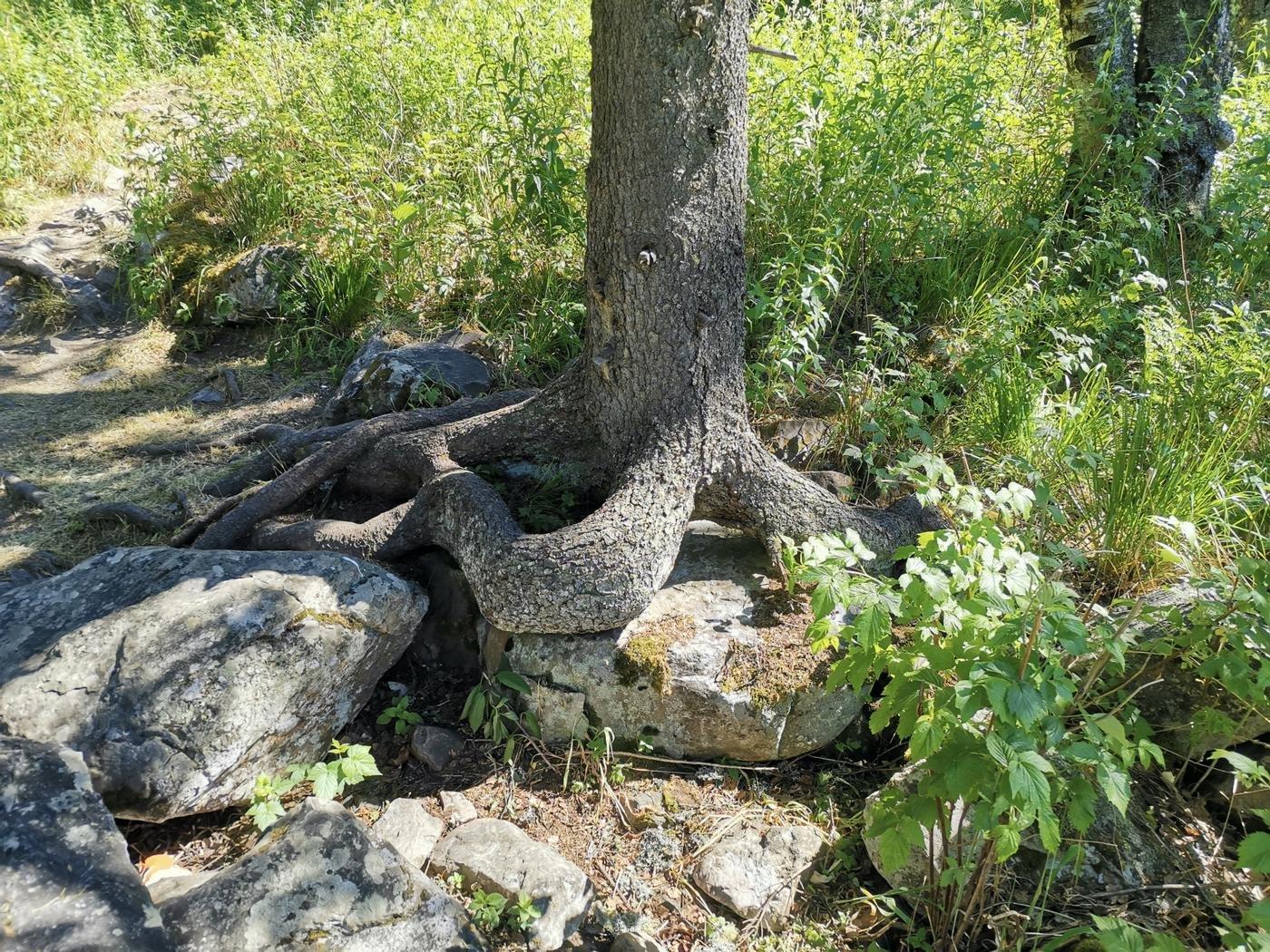 Меня очень порадовало это дерево